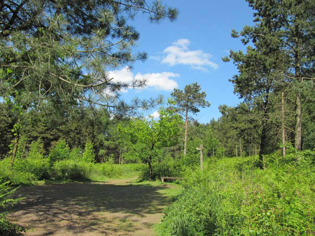 Re-energize yourself with a woodland meditation