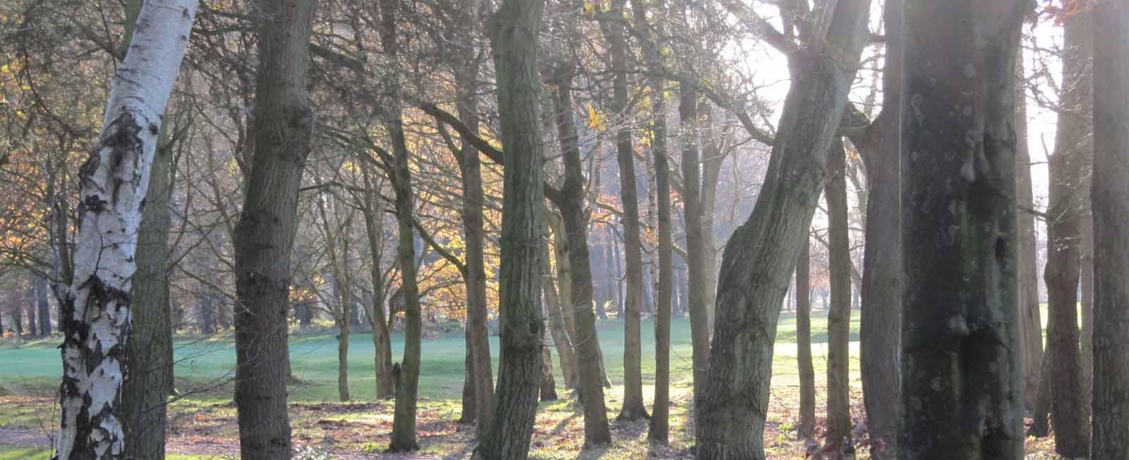 Tree scene by www.paulhoughton.co.uk